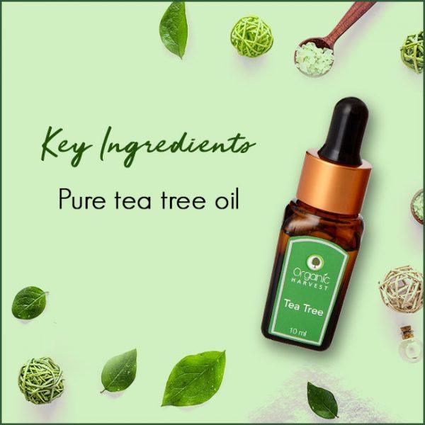 Tea-Tree-Key-Ingredients