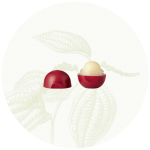 lip-balm-pomegranate-02