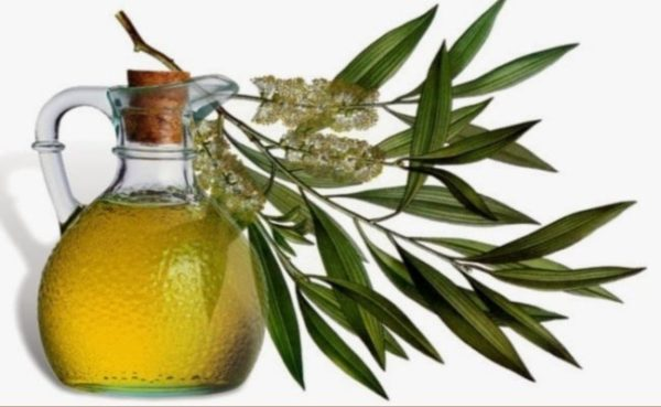 Citriodora oil 1
